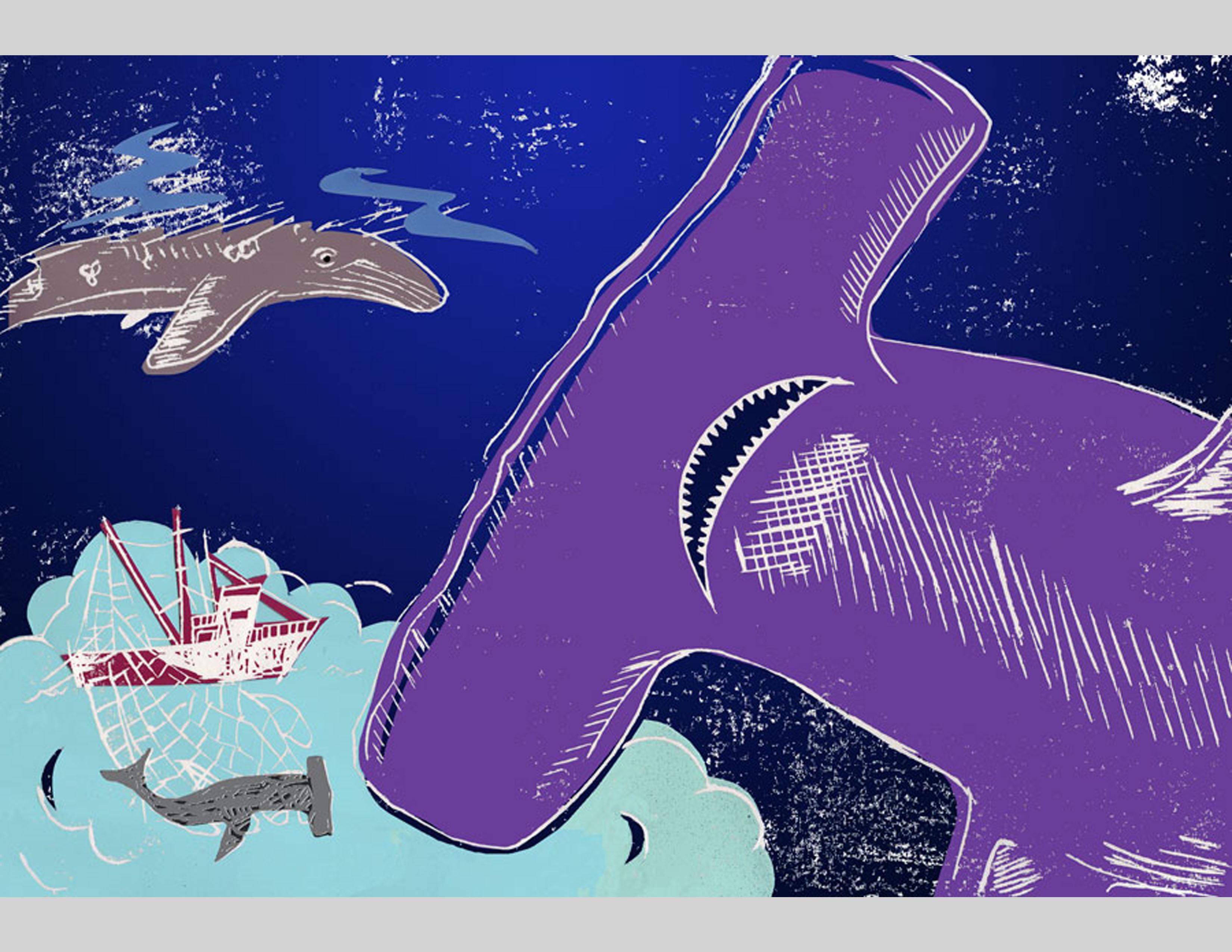 2a-komo-2-shark